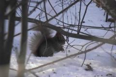 Белочка зимой, семечки грызет.
